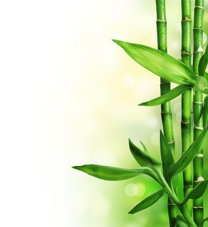 feng shui: Bamboo