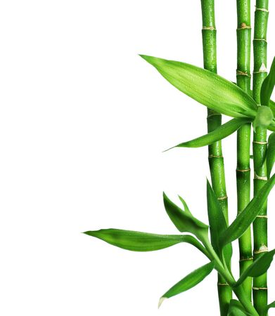 tropical border: Bamboo isolated on white