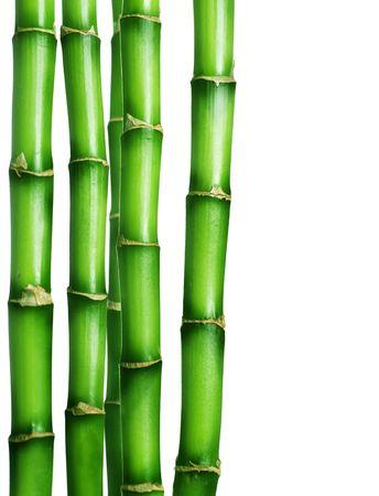 shoots: Frontera de bamb� aislado en blanco