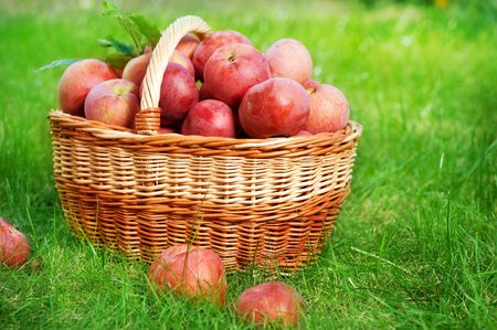 Fresh Organic Apples in the Basket Stock Photo - 9352582