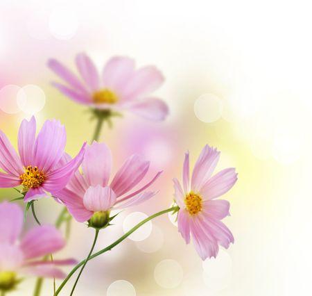 dessin fleur: Belles fleurs fronti�re sur blanc Banque d'images