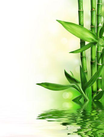 feuille de bambou: Fronti�re de bambou