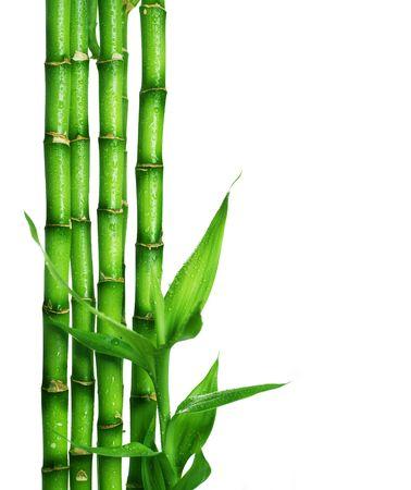 guadua: Frontera de bamb�  Foto de archivo