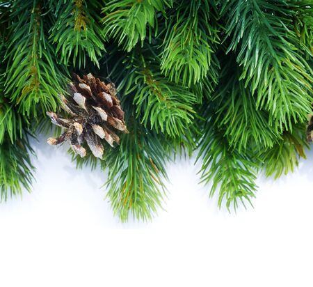 fir: Christmas Fir Tree border over white