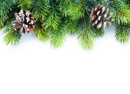 pine cones: Christmas Fir Tree border over white