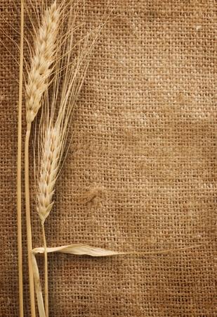 cosecha de trigo: Trigo Foto de archivo