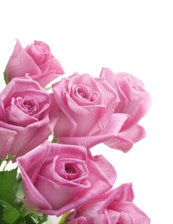 stem: Frontière roses
