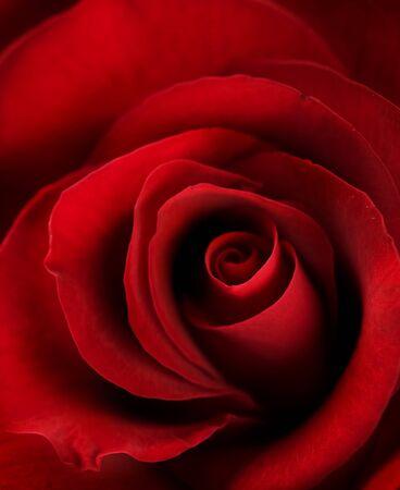 Valentine roten Herz Rose