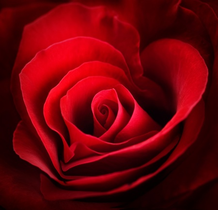 Red Roses design photo