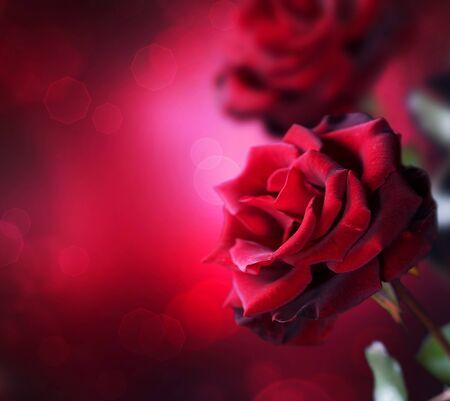 Red Roses design photo