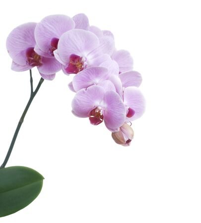 Orchid Stock Photo - 9033235