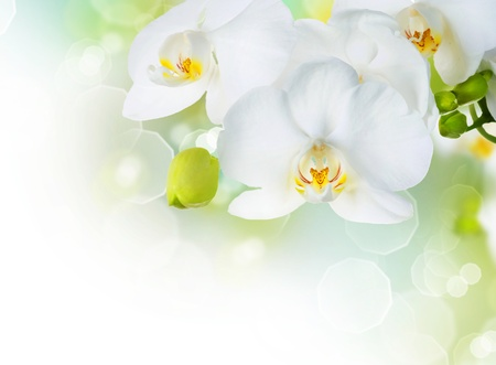 Orchid border design photo