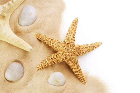 seastar: Sand and seastar border over white. Vacation concept