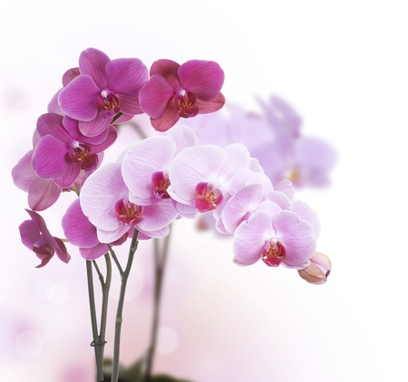 bunch up: Orchids