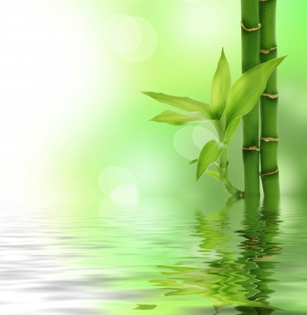 fengshui: Bamboo border Stock Photo