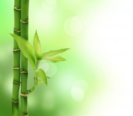 japones bambu: Bamb� de Zen