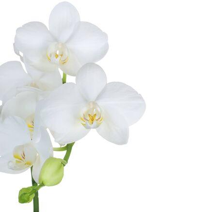 Beautiful White Orchid Border. Isolated on white photo