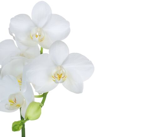 Beautiful White Orchid Border. Isolated on white photo