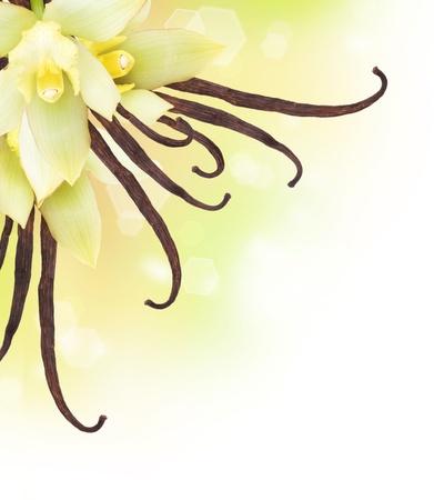 flor de vainilla: Diseño de frontera vainilla