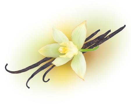 vanilla flower: Vanilla