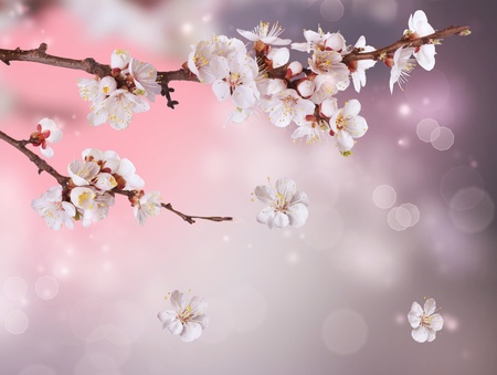 Spring Blossom Design photo