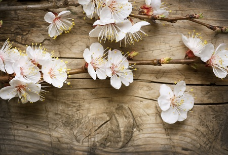 Spring Blossom over wooden background Stock Photo - 9378804