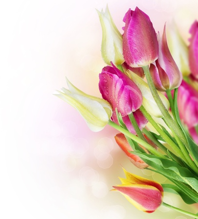 Spring Tulip Flowers border design photo