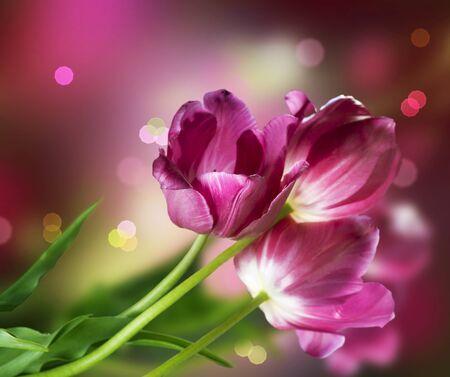 Fleurs. Conception de carte anniversaire Banque d'images - 9539612