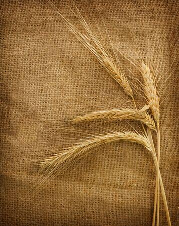 Wheat Stock Photo - 9539610