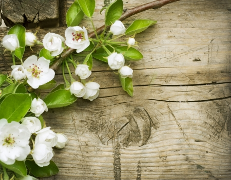 april flowers: Spring Blossom over wooden background Stock Photo