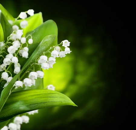 botanical medicine: Lily-of-the-valley flowers design