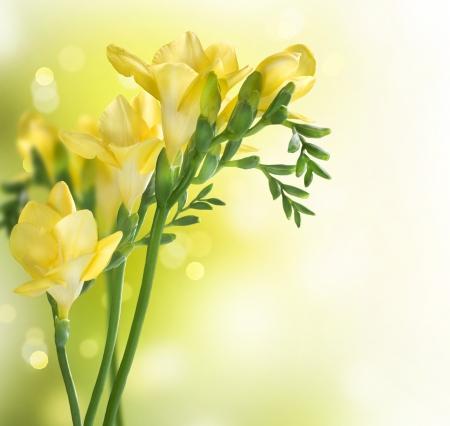 flower arrangements: Freesia Flowers border design Stock Photo