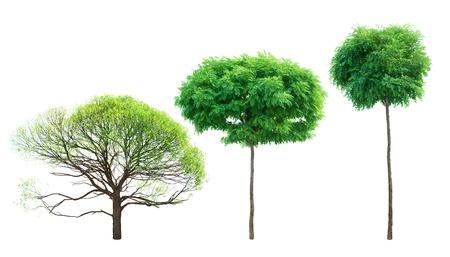 Tree set over white photo