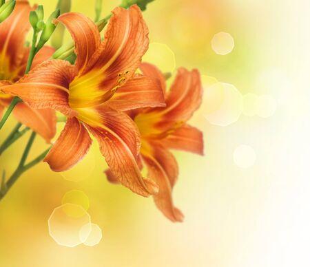 Yellow Lily Flower border design photo