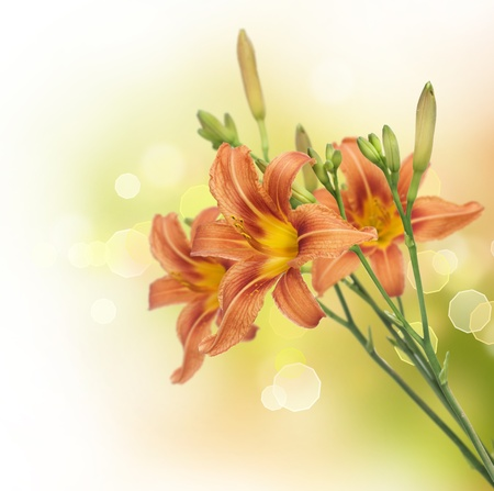 Yellow Lily Flower border design photo
