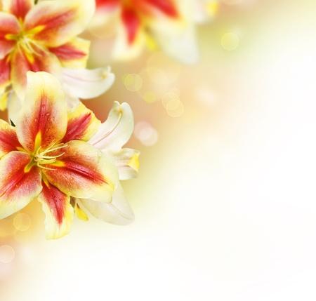 lily flowers: Dise�o de frontera de Lily flores. Flores de verano