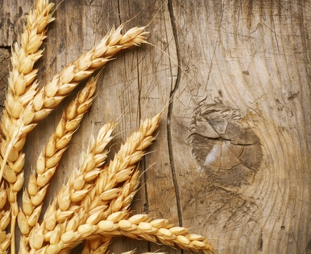 Wheat Ears on the Wood Background photo