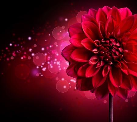 dalia: Dise�o de flor de oto�o de Dahlia Foto de archivo