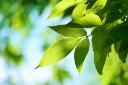 venation: Green Leaves. Nature background  Stock Photo