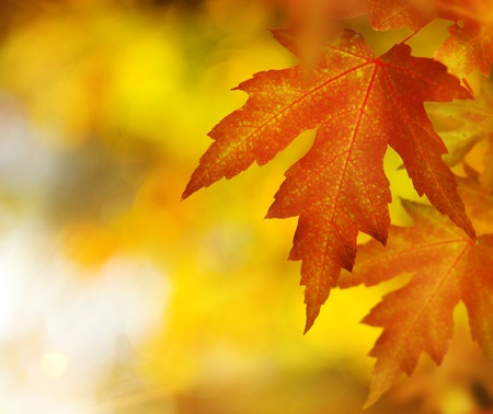Fall. Autumn  photo