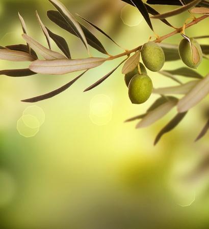 hoja de olivo: Dise�o de borde de aceitunas  Foto de archivo