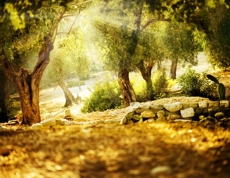 fantasy landscape: Olive Trees Stock Photo