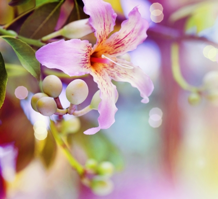 tropical border: Abstract Flower Design  Stock Photo