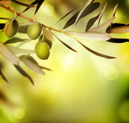 hoja de olivo: Aceitunas  Foto de archivo