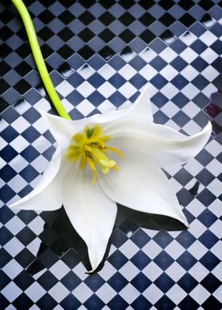 White Lily Flower photo
