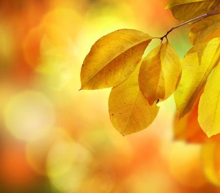 Fall. Autumn Background Stock Photo - 10848248