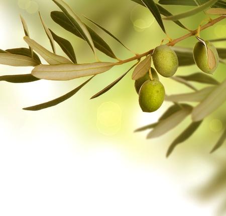 hoja de olivo: Dise�o de la frontera de oliva Foto de archivo
