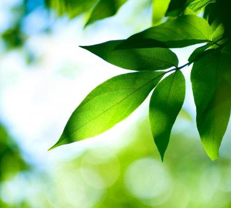 venation: Green Leaves. Nature background