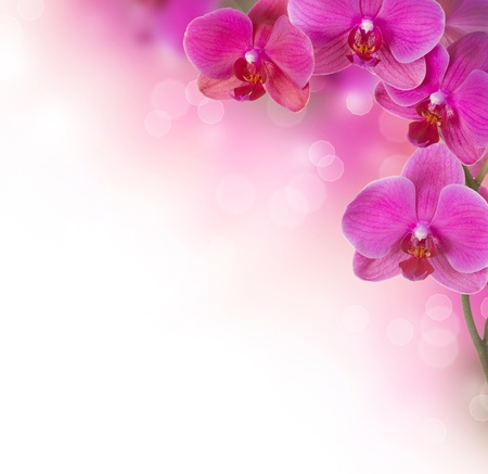 pink orchid: Orchid Flower border design Stock Photo