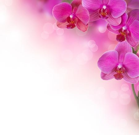 flores exoticas: Orquídea Flor diseño de la frontera